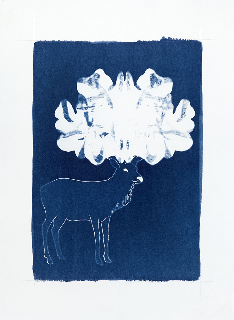 Cyanotypes - Metamorphosis